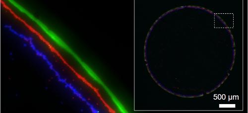 Dr Tak Sing Wong a 2010 Croucher Postdoctoral Fellow at Harvard University is using coffee ring chromatography to separate biological molecules黃得勝博士以咖啡圈色層分析法分隔生物分子。黃博士於2010年獲頒裘槎博士後獎學金到哈佛大學深造。